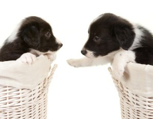 astrology of pups