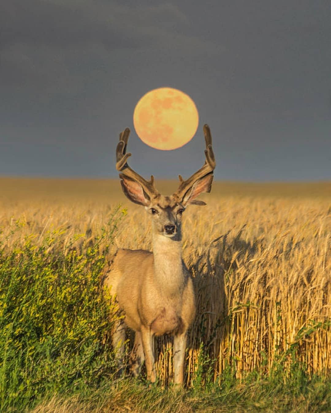 The deceptive harmony of the Libra Full Moon and Mercury retrograde