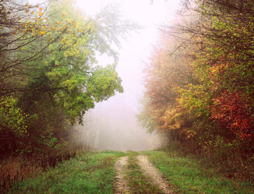 Sunday musings:  Follow your own path